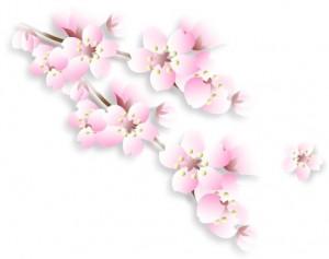 3-20桜