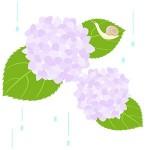 今年の梅雨